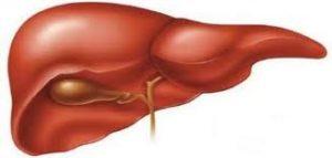تضخم-الكبد