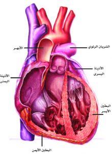 أعراض-أمراض-القلب-الوعائية