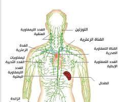 أعراض-سرطان-الغدد-الليمفاوية