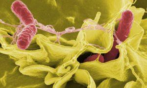 أسباب الإسهال (بكتيريا السالمونيلا)
